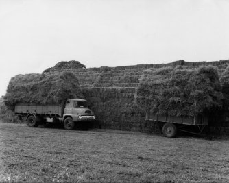 Thatch for the stacks at Hill Farm