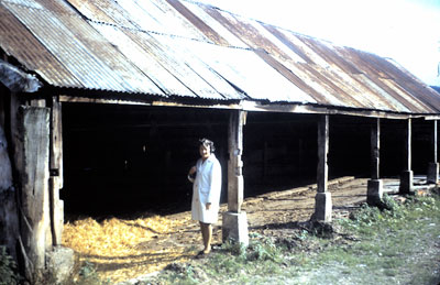 Eileen Speller at the cow stalls - October 1970